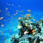 Hurghada023 (1)